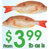 Fresh Lane Snapper - $3.99/lb