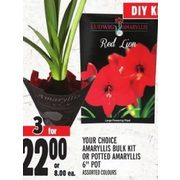Amaryllis Bulk Kit Or Potted Amaryllis Bulk Kit Or Potted Amaryllis - 3/$22.00